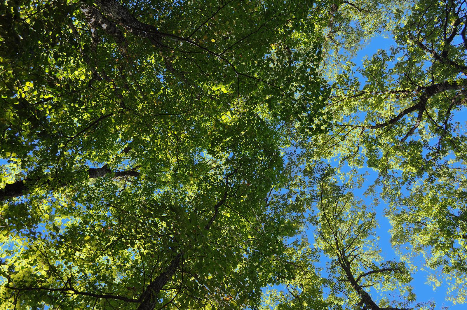 cimes_arbres2